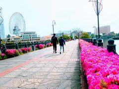 汽車道のツツジと 横浜キャビンを眺めながら 散歩