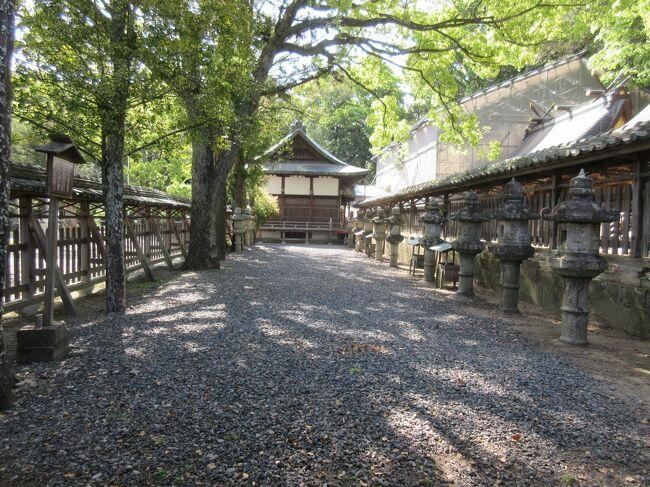 闘鶏神社を観光しました。<br /><br />初日から夏日になり、とても暑かったです。