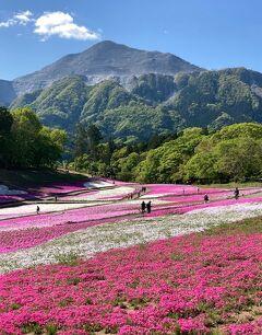 『羊山公園の芝桜はもう満開です』との話を聞き、早速出かけました!