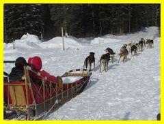 アラスカでオーロラ(2)アイスミュージアム&犬ぞり体験@チナ温泉リゾート