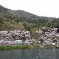 今年は早かった・・・お花見クルーズ☆海津大崎の桜&びわ湖大津館のイングリッシュガーデン