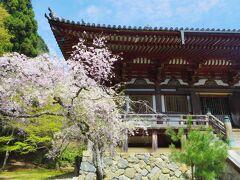 2021年4月 京都と奈良でお花見(8)高山寺⇒西明寺⇒神護寺⇒大覚寺