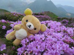 九重山でミヤマキリシマを見てくるクマ!雨の平治岳その2