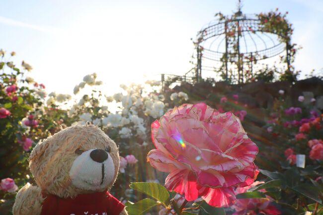 Latvijas Lācisの大冒険♪ 薔薇の花のある風景を求めて…