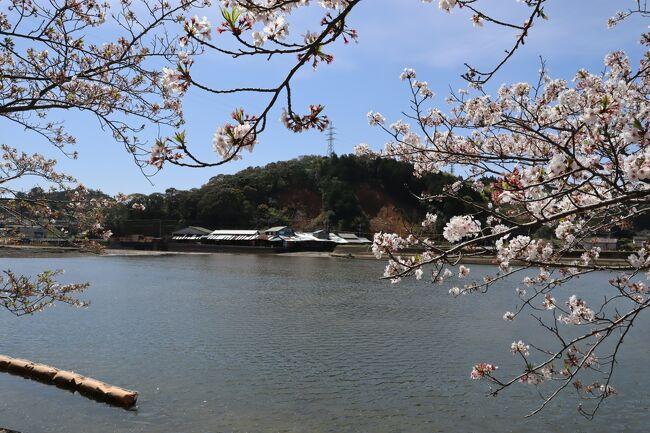 いつも何かと所用でやってくる熊本県南部。<br />用件済ませたら、速やかに帰りますが、それもあまりに愛想がない。<br />ということで、今回は休日を利用してやってきました。<br />そして、密を避けるべく花見ドライブです。<br /><br />…のはずが桜の開花が例年より早かったらしく、花見というよりも桜吹雪の見学になってしまいましたlol