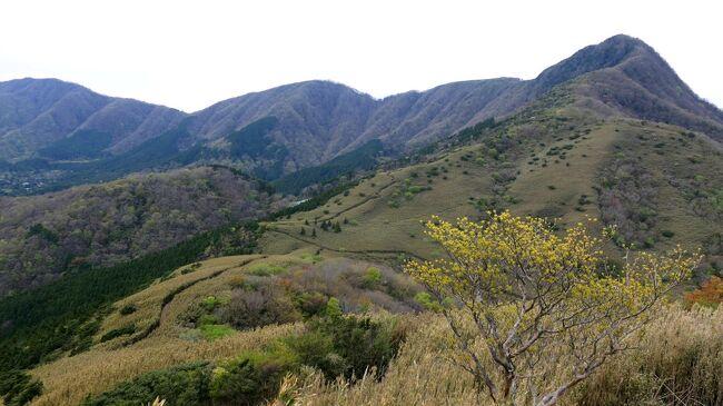 箱根外輪山、カヤトだらけの道を行く part1:明神ヶ岳