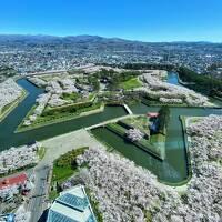 桜満開☆初めての函館 静かにひとり旅 五稜郭の桜編 ②
