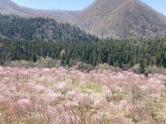 福島の桜・2日目~圧巻の桜峠・越代の桜へ