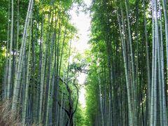 中学生以来の京都修学旅行(3)