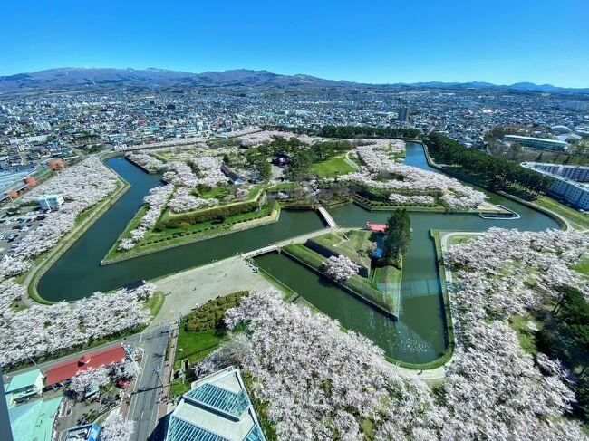 函館旅行の二日目 今回の旅行で一番楽しみにしていた五稜郭の桜を見に行きます。<br />晴天に恵まれて桜も満開!<br />平日で空いてるしのんびり過ごせました。<br /><br />その後 廻った元町周辺 旧函館区公会堂は、リニューアルオープンの初日でした。<br />行きたいと思っていたお店は、休業中で行けなかったのが心残りですが コロナ禍の旅行なので仕方ないですね。<br /><br />旅行ができたことに感謝しています。