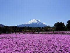富士芝桜まつり~白尾山公園