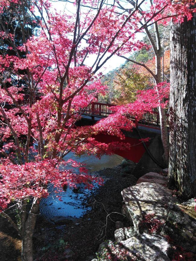コロナがひと段落していた秋にGOTO利用で県内旅行で、奥三河に行ってきました。<br />日ごろは中々手が出せない旅館にもこの機会を活かして行ってきました。<br />朝のとんびの餌付けは中々見ものです。また、板敷川沿いの貸し切り露天はいいですね。<br />愛知県民の森と赤塚山公園では紅葉を楽しみ、ぎょぎょランドと竹島水族館では、<br />お魚たちを楽しみました。愛知県内も広いですし、楽しめますね。