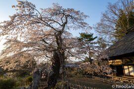 21年4月 八ヶ岳ライフ:富士見町しだれ桜