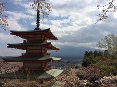 The 日本!的な桜と富士山!