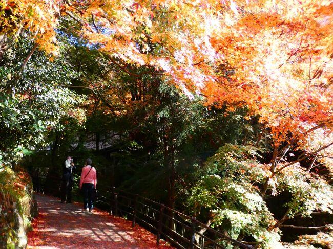 京都 大原 呂律川(Ryosen & Ritsusen Rivers, Ohara, Kyoto, JP)