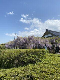 2021GWは花と緑に癒されて①住雲寺(ふじ寺)