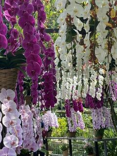 2021GWは花と緑に癒されて②とっとり花回廊と草間彌生展@米子美術館