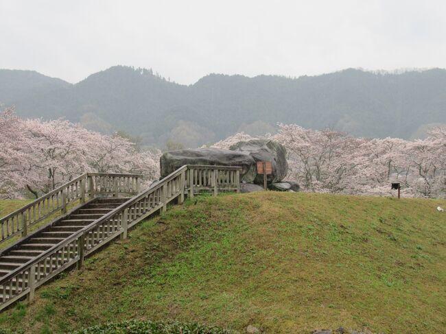 今回は父の希望で、奈良の明日香と和歌山の熊野がメインです。<br />利便性やコロナのことも考えてドライブ旅行にしました。<br />どこへ行っても思ったより観光客が多かったです。<br />行く先々でちゃんとコロナ対策をとられてて安心できました。<br />1日目 3月28日(日)雨 奈良<br />橿原神宮 → 明日香村(橘寺・亀石・石舞台古墳・高松塚古墳・キトラ古墳・飛鳥寺)<br />宿泊 ホテル&amp;リゾーツ和歌山みなべ<br />2日目 3月29日(月)曇 和歌山<br />熊野三山(熊野本宮大社・熊野速玉大社・青岸渡寺・那智大社・那智の滝)<br />宿泊 ホテル浦島<br />3日目 3月30日(火)曇 和歌山<br />串本 → 潮岬 → 白浜