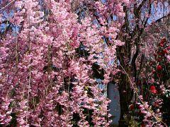 春の余韻を福地温泉にて