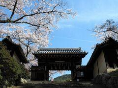 春爛漫の京都・近江桜旅(6)東寺のライトアップと毘沙門堂の桜