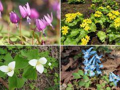 2021 北海道の遅い春 旭川市郊外に咲く野の花