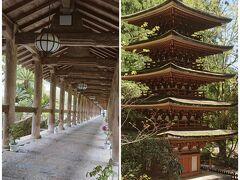 プレザンス桜井に泊まることが目的 そして、初、長谷寺&室生寺 詣で。Vol.1