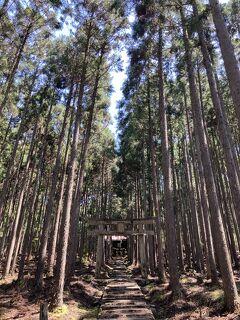 京の週末 「森の京都」京北のマイナースポットをご紹介~黒田百年桜・賀茂神社~
