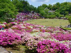 福井県のツツジ&シバザクラを楽しむ