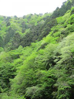 2021 新緑の茶臼山と道中の石仏たち