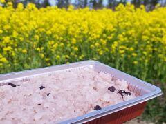 ハワイに行けないので秋田を楽しんでまーす大潟村菜の花ロードの旅
