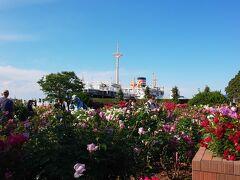 2021年GWはバラ三昧 その2 山下公園、港が見える丘公園、横須賀ヴェルニー公園
