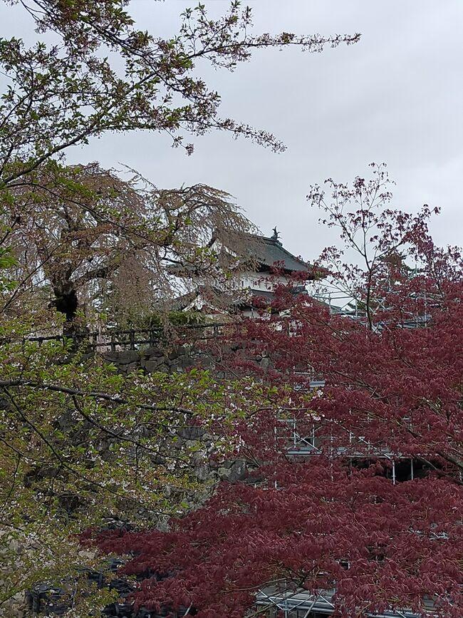 GWを利用しての北陸ツアーの最終目的地は、金沢。<br /><br />コロナウイルス感染拡大の折、車での移動を選択した。<br /><br />札幌を早朝出発し、函館で満開の桜を見て、フェリーで青森にわたり、初日の宿泊地は、弘前。<br />弘前公園では、さくらまつりが開催されていたが、例年より桜の開花が早く、ソメイヨシノは、既に散っていた。<br /><br />弘前公園を散策した後、弘前駅前のお店で、地元のお酒と津軽の料理を楽しんだ。