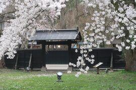 行くぜ、東北。みちのくの小京都・角館を満喫(桜まつり・郷土料理)前編