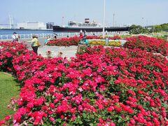 ワクチンGETだぜ!心置きなくバラを楽しむ 山下公園&港の見える丘公園