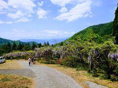 長野若穂「新山田見晴らし公園の藤棚」と「赤野田のつつじ山」