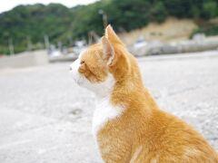 馬島の猫たち