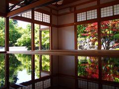 奇跡の絶景!桐生・宝徳寺で新緑の床もみじを見てきました!