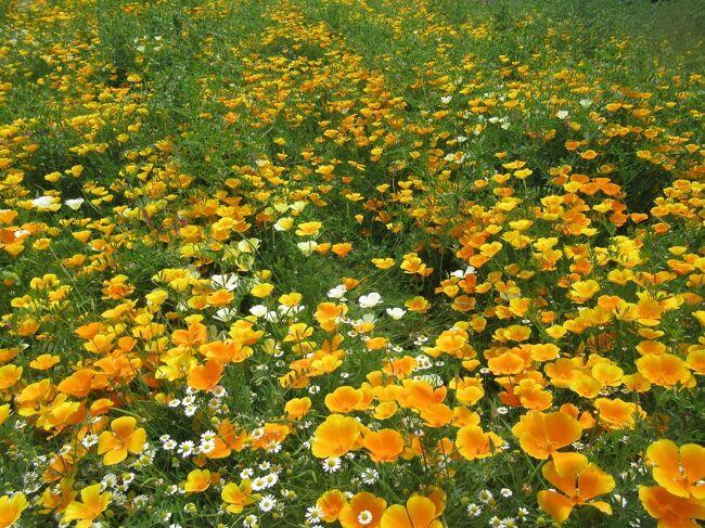 八ヶ岳はまだまだ早春でした・・・ミレーをじっくり鑑賞した山梨美術館と薔薇に癒された勝沼ハーブ庭園!