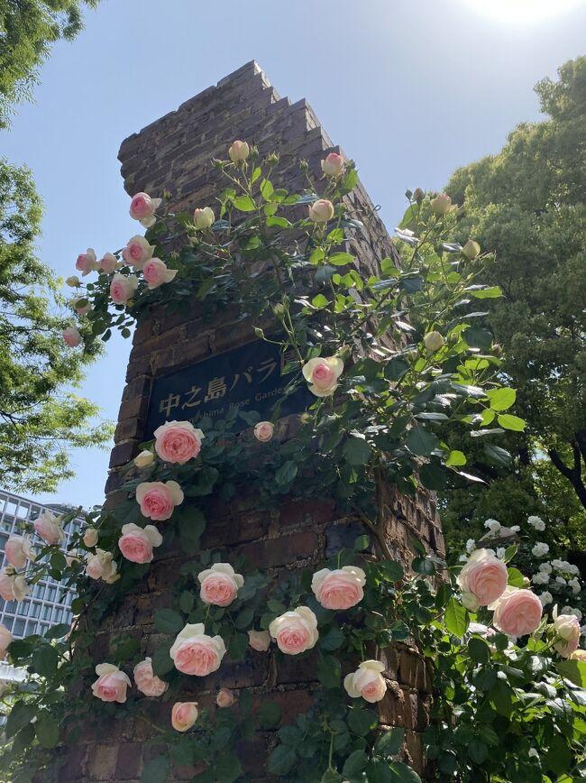 コロナ禍ですが、<br />季節が来ると花はいつもどおりに咲いてくれています。<br /><br />早朝のガラガラ電車に乗って行き、帰りは徒歩で帰り、できる限りの対策をして3回ほどバラを見てきました。<br /><br />あほみたいにバラばっかりの旅行記です。