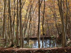 秋の美人林