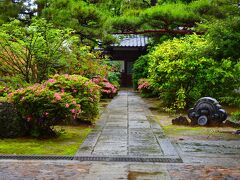 五月雨に眩い新緑~妙心寺塔頭の門前でサツキを愛でる~