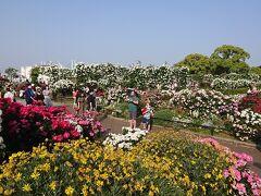 5月上旬の『横浜ローズウィーク』の時期に、山下公園のばら園を堪能。