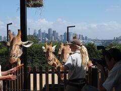 シドニー2015 Vol.1/行き~タロンガ動物園とワトソンズベイ