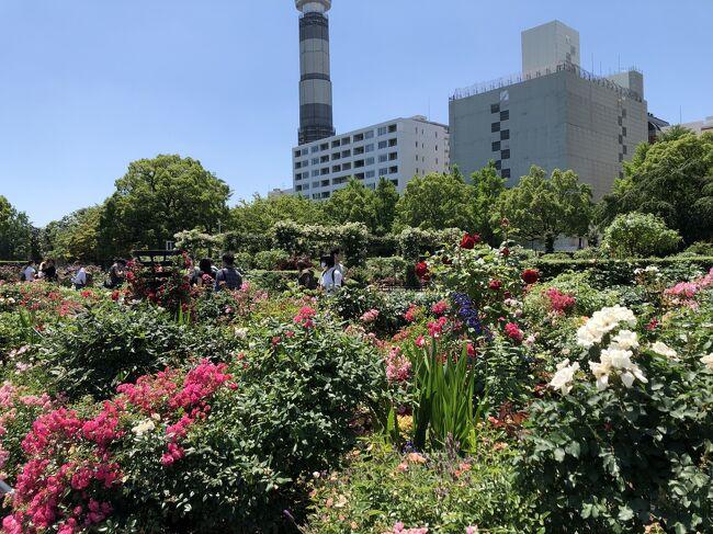 見頃も終わりに近いバラを見に、山下公園へ。<br />桜木町駅から、みなとみらい周辺を散策しながら、2時間ほどかけて山下公園を往復してきました。