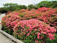 2021年5月那須高原八幡のつつじの花がとても綺麗でした。