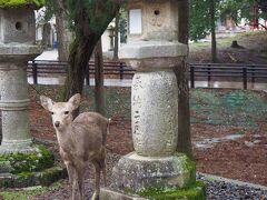 2021年 るなさんと行く春爛漫の奈良&京都【1】雨の奈良しっとり(ずぶ濡れ?)散歩~ガブちゃん、会いに来たよ♪~