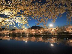 2泊4日でドライブ旅、見てみたかった弘前公園の桜と花筏を見に弘前へ【3】満開の桜と花筏
