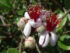 泰山木の花を探して、伊丹市荒牧と隣接する宝塚市を回りました その7完。