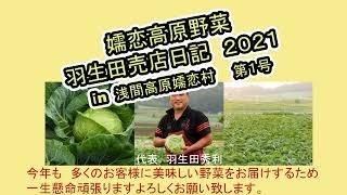 野菜の美味しい嬬恋村 種付けが始まりました。