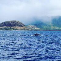 《ハワイ》ヒルトン花火~冬のホエールウォッチング―2島を楽しむ!カウアイ&オアフ 2019.2 ③